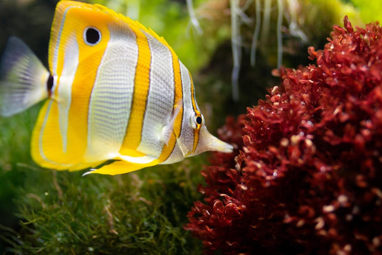 Decoration, Fish Food Online Australia