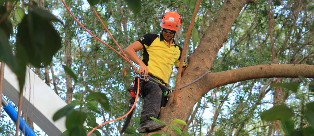 Perth Tree service : Tree Pruning & Trimming Services