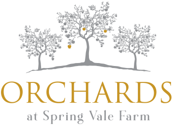 Orchard at springvale Farm